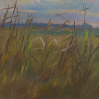 Field. Evening. Autumn